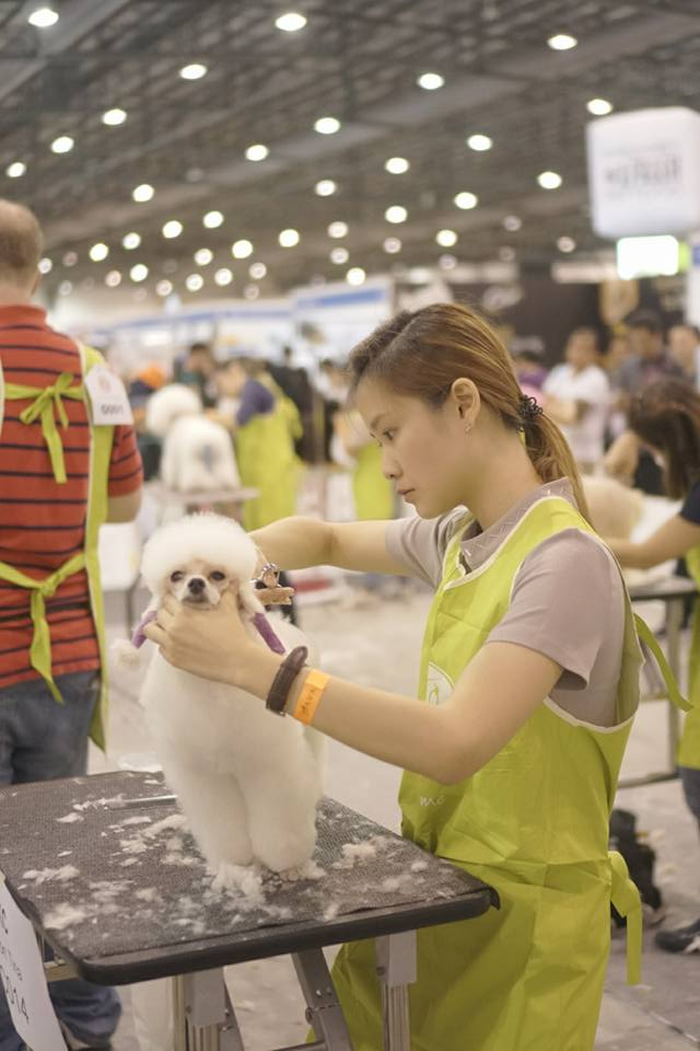 Dog Grooming School Singapore